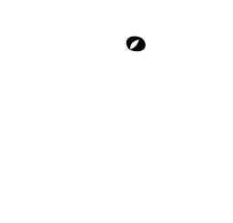 Coconut Lizard